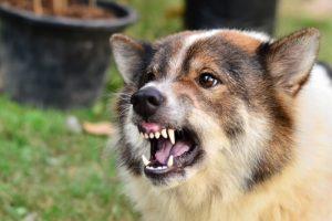 Mercer CountyNJ Dog Bite Injury Lawyers