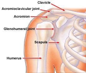 The bones of the shoulder injury lawyers