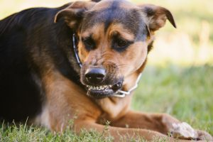 Dog Bite Injury Attorneys Mercer County, NJ