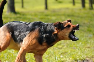 Why A Dog Bite Can Be More Costly Than You Think